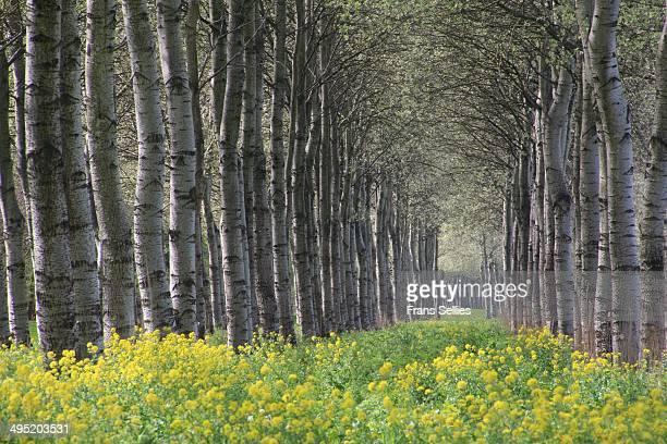 mysterious forest. - frans sellies stockfoto's en -beelden