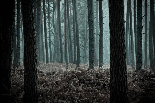 mysterious forest, rambouillet, ile-de-france, france - haunted stock photos and pictures