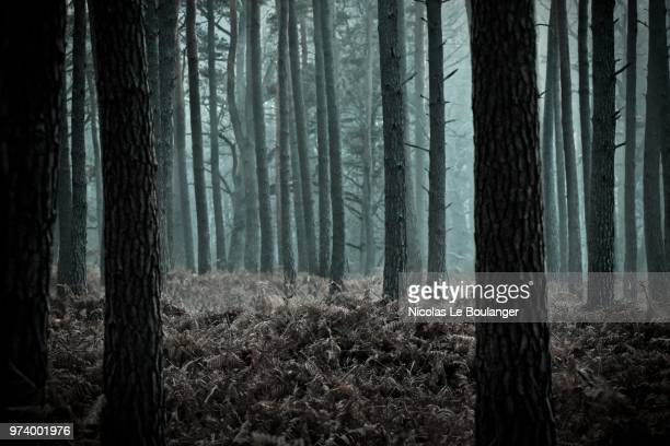 mysterious forest, rambouillet, ile-de-france, france - spooky stock pictures, royalty-free photos & images