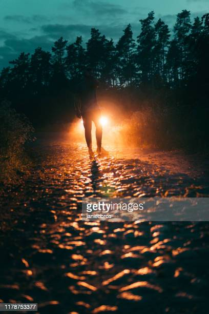 mysterious forest scene - approaching stock pictures, royalty-free photos & images
