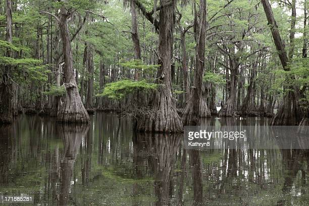 Mysterious Louisiana Swamp