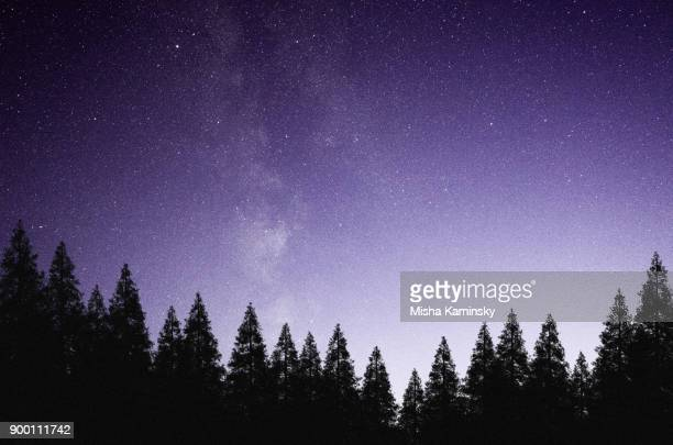 mysterious night sky above the coniferous forest - grande carro costellazione foto e immagini stock