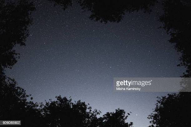 Mysterious starry sky over the deciduous forest