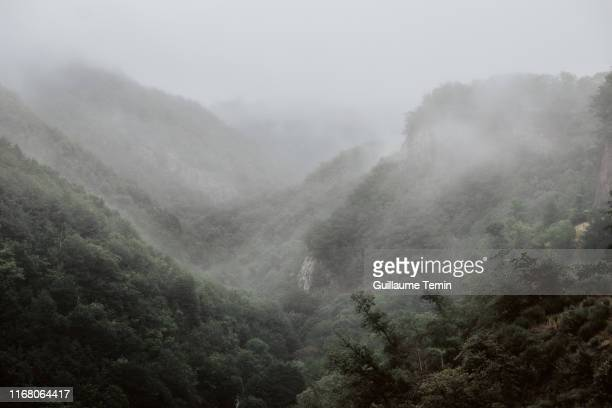 mystic forest - heatwave stock pictures, royalty-free photos & images