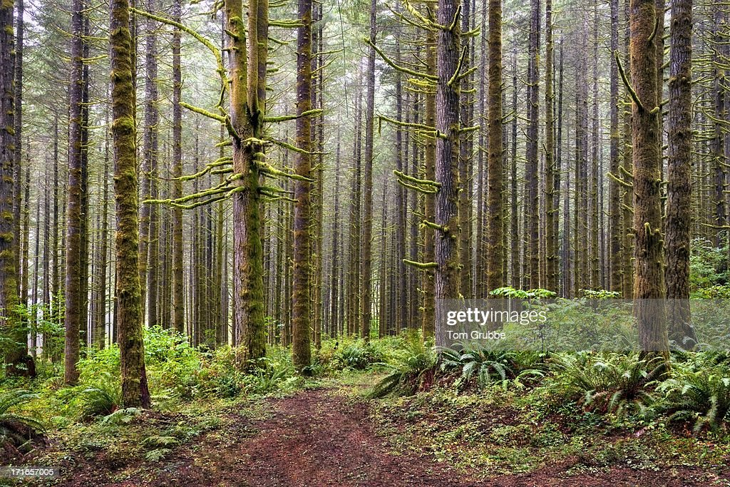 Mystic forest : Stock Photo