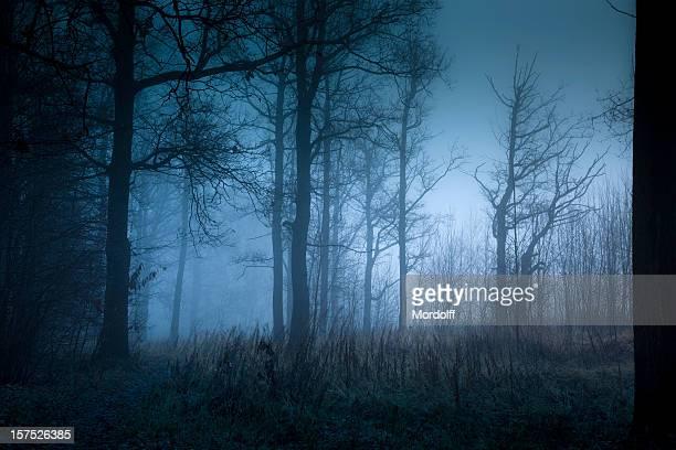 Mystic Bosque en otoño en la niebla