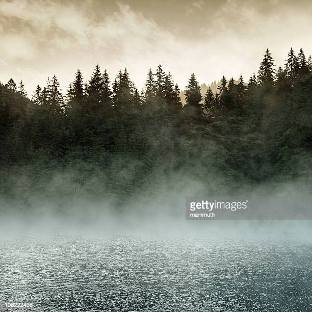 mystic lake at sunrise - fog stock pictures, royalty-free photos & images
