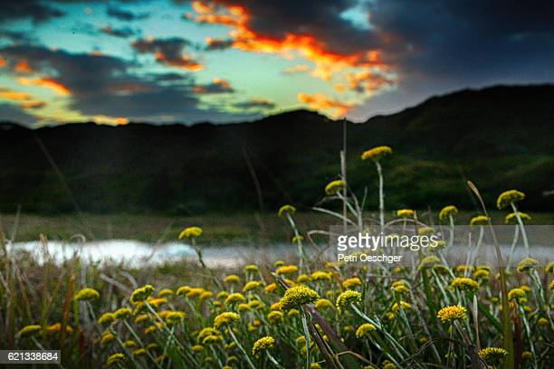 mystic river - eastern cape stock pictures, royalty-free photos & images