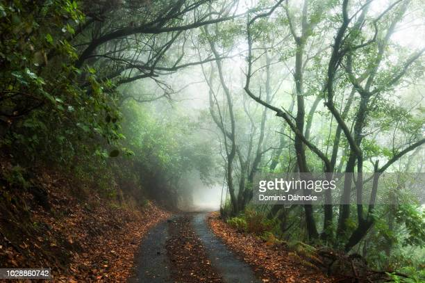 Mystic road through foggy forest
