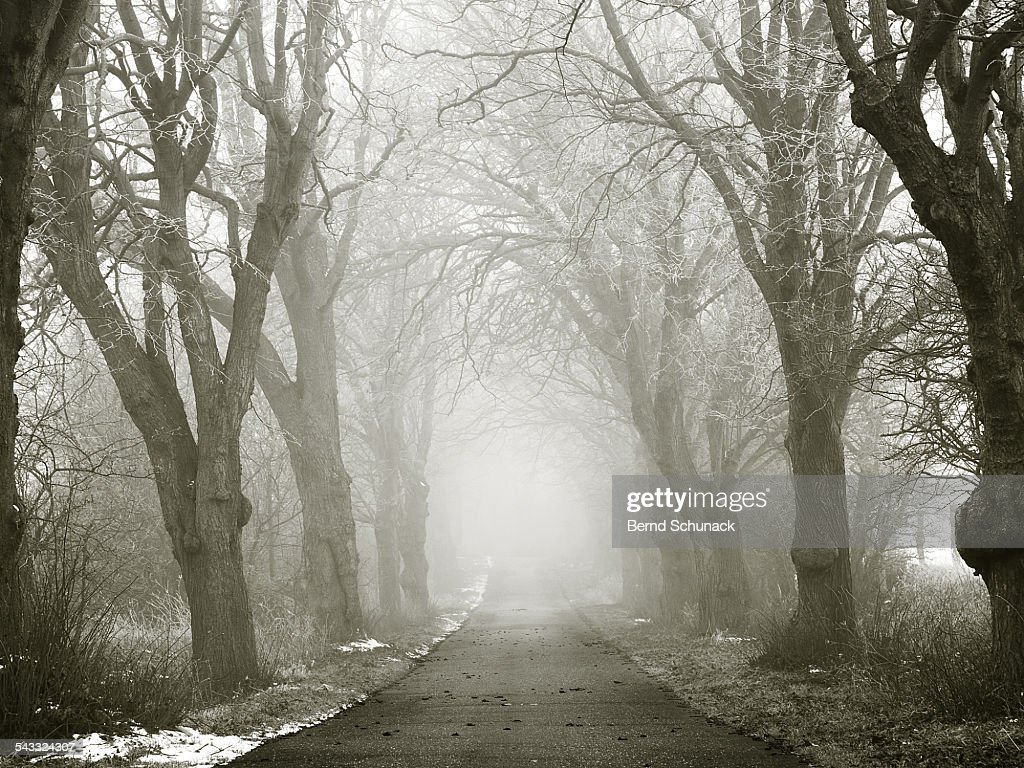 Mystic Winter Forest : Stock-Foto