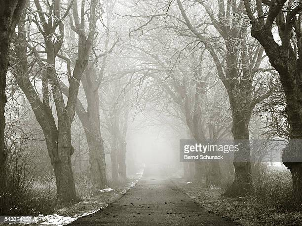 mystic winter forest - bernd schunack stock photos and pictures