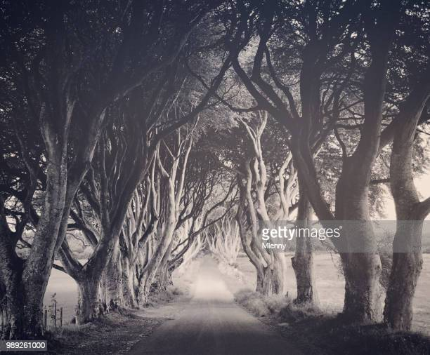 mystical dark hedges northern ireland - mlenny photography stock pictures, royalty-free photos & images