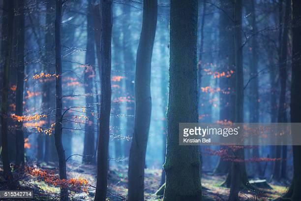 Mystical, enchanted woodland scene at sunrise in UK