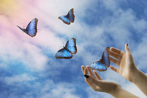 mystical flight of freedom 966426144