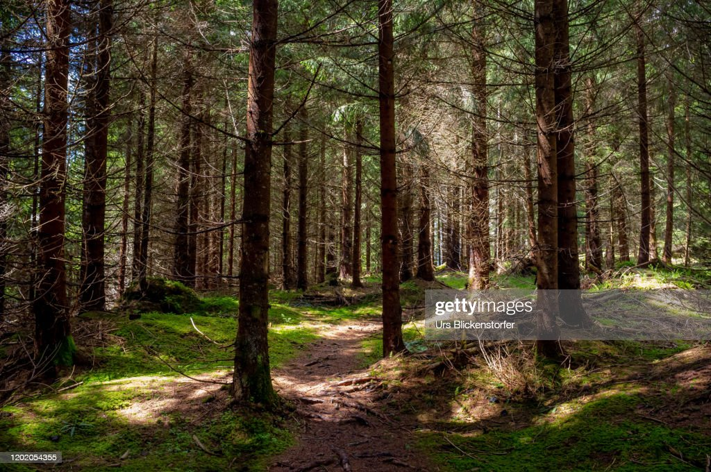 Mystical Forrest : Stock Photo