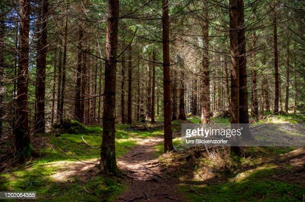 mystical forrest - schwyz stock pictures, royalty-free photos & images