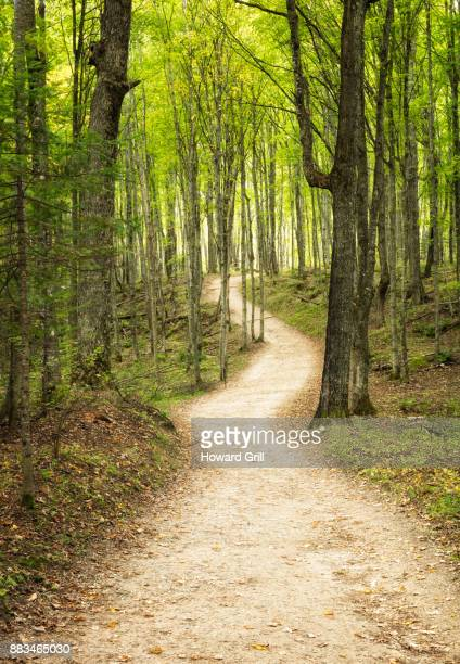 mystical pathway - munising michigan stock pictures, royalty-free photos & images