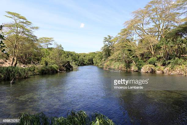 Mzima Springs,Tsavo West National Park, Kenya