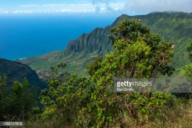 "na pali coast from pu""u2019u o""u2019 kila lookout - don smith stock pictures, royalty-free photos & images"