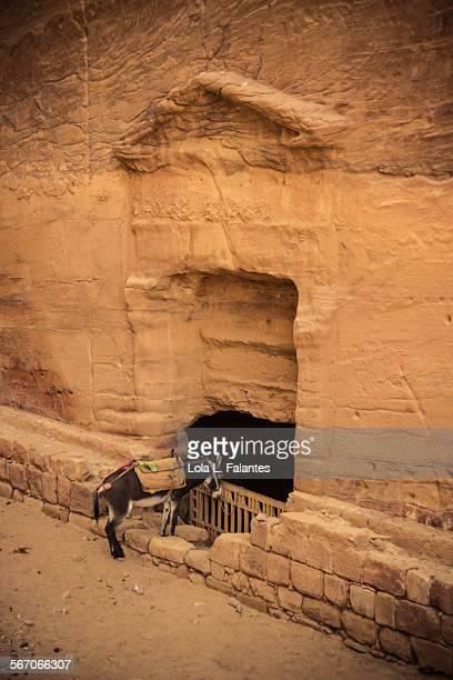 Nabatean donkey