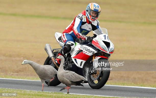 Nacho Calero of Spain avoids two birds on the track as he competes in the SuperSport FIM World Championship Free Practice session ahead of the 2018...