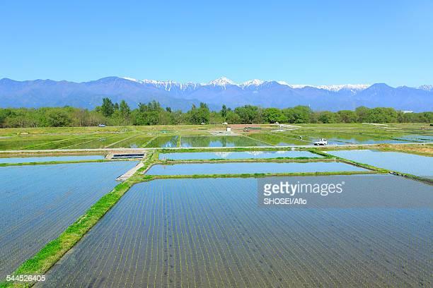 nagano prefecture, japan - 水田 ストックフォトと画像