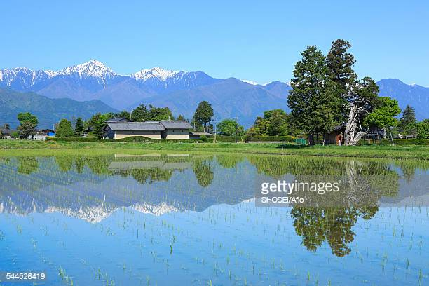 nagano prefecture, japan - satoyama scenery stock pictures, royalty-free photos & images