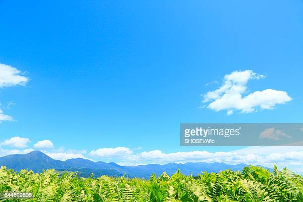 nagano prefecture, japan - 台地 ストックフォトと画像
