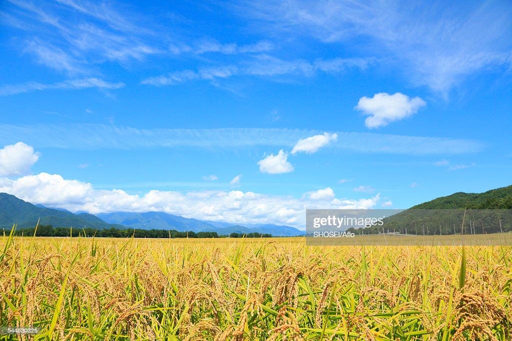 Nagano Prefecture, Japan : Stock Photo