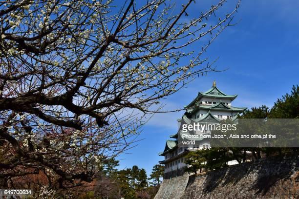 Nagoya Castle and Plum Blossom, Nagoya, Japan