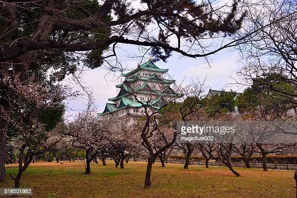 名古屋城や梅の花