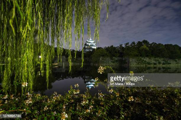 nagoya castle - maca plant stock photos and pictures
