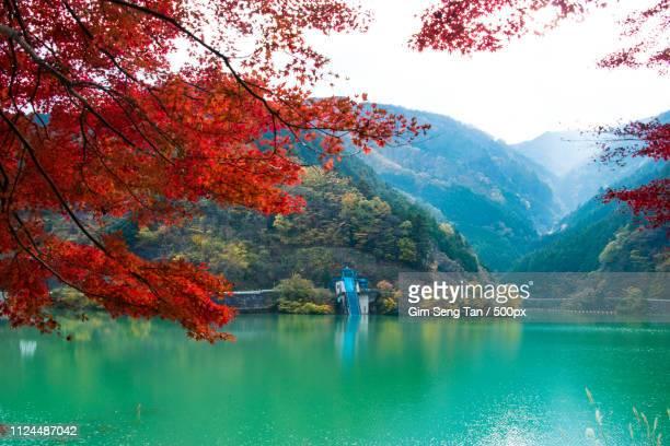 naguri lake at autumn hanno - 埼玉県 ストックフォトと画像