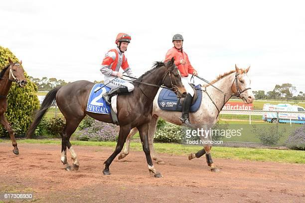 Nahanni ridden by John Allen returns after Patrick of Coonawarra Maiden Plate at Hamilton Racecourse on October 23 2016 in Hamilton Australia