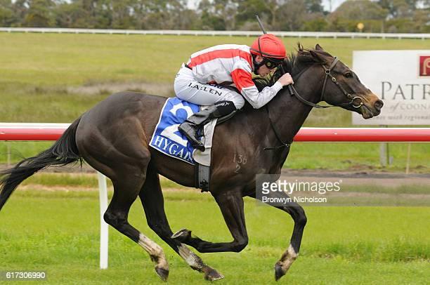 Nahanni ridden by John Allen wins Patrick of Coonawarra Maiden Plate at Hamilton Racecourse on October 23 2016 in Hamilton Australia