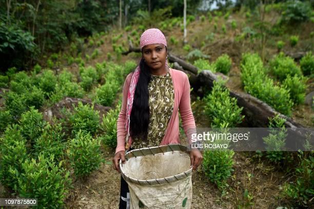 TOPSHOT Naikelly Delgado a Venezuelan migrant working as a 'Raspachin' poses for a picture at a coca plantation in the Catatumbo region Norte de...