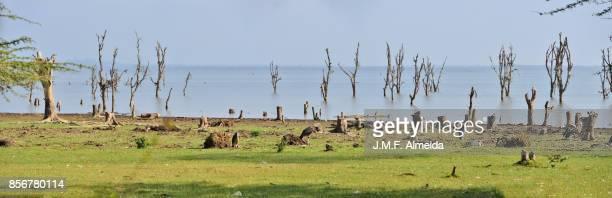 naivasha lake panorama - lake nakuru - fotografias e filmes do acervo