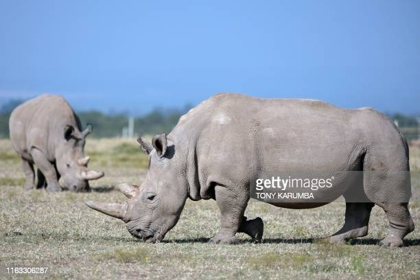 4 332 White Rhinoceros Photos And Premium High Res Pictures Getty Images