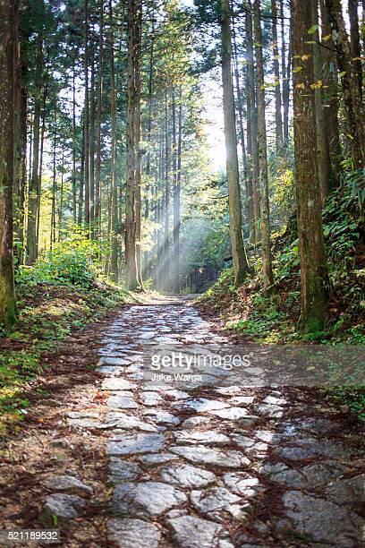 nakasendo way, forest section - jake warga fotografías e imágenes de stock