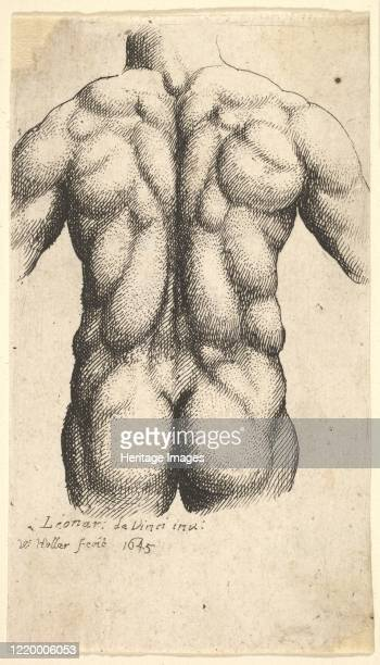 Naked male torso seen from behind, 1645. Artist Wenceslaus Hollar.