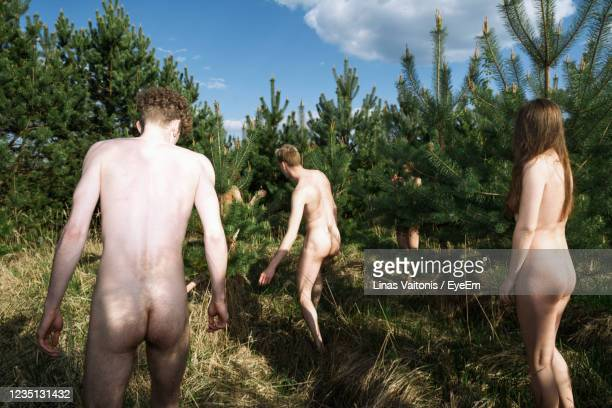 naked people in forest - naturists stock pictures, royalty-free photos & images