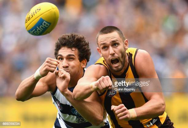 Nakia Cockatoo of the Cats and Jack Gunston of the Hawks compete for the ball during the round four AFL match between the Hawthorn Hawks and the...