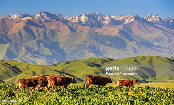 nalati grassland, xinjiang china - tien shan mountains stock pictures, royalty-free photos & images