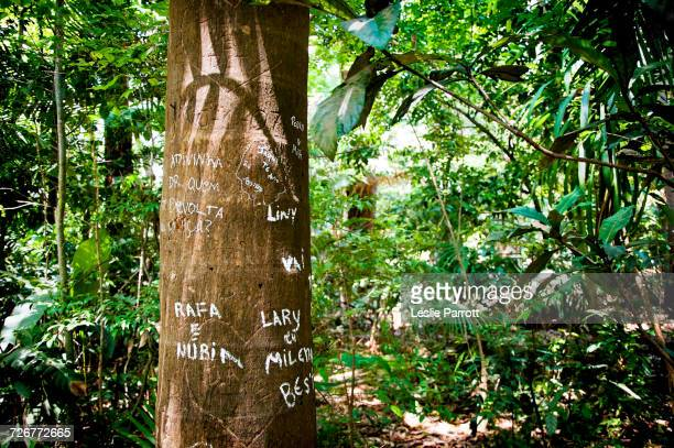 Names Carved And Marked On A Tree Trunk In A Park
