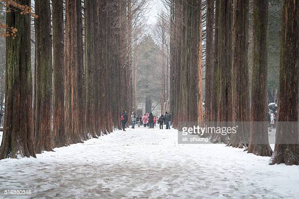 Nami Island on winter