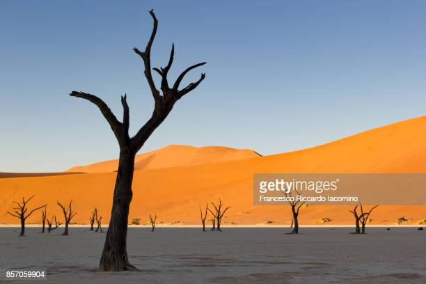 Namib desert, Dead Vlei, Namibia, Africa