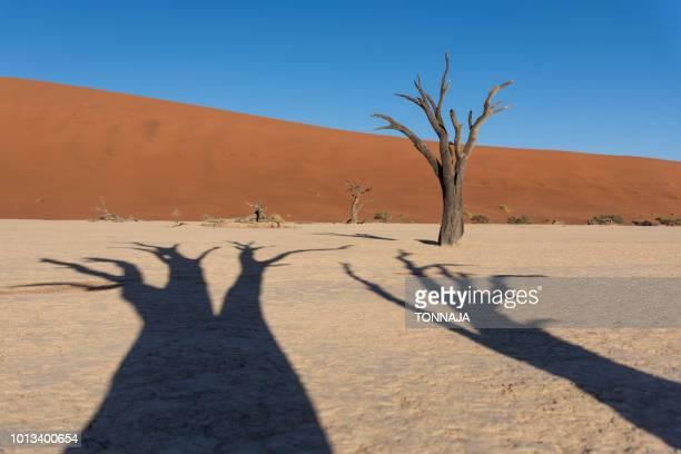 Namib desert, Deadvlei at Sossusvlei sand dunes, Namibia, Africa