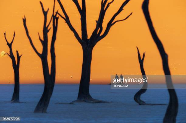 namib desert, deadvlei at sossusvlei sand dunes, namibia, africa - namib naukluft national park stock pictures, royalty-free photos & images