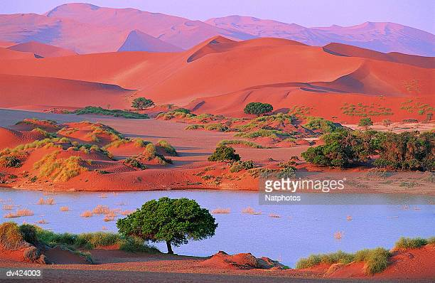 namib desert, sossusvlei, namibia, africa - namib naukluft national park stock pictures, royalty-free photos & images
