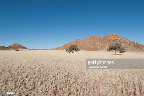 namib landscape - prairie stock photos and pictures